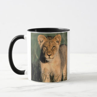 Mug Un petit animal de lion observe l'appareil-photo