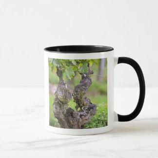 Mug Une vigne très vieille dans le vignoble de Clos de