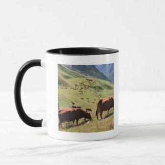 Mug vaches en vallée de Tarentaise - course de Tarine