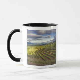 Mug Vignoble. Napa Valley. Napa. Le comté de Napa,
