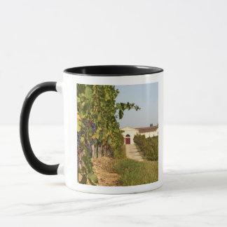Mug Vignobles, petites vignes de verdot et