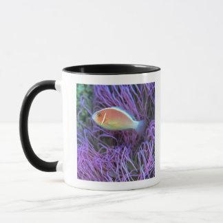 Mug Vue de côté d'un poisson d'anémone rose,
