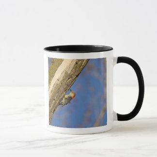 Mug woopecker Rouge-gonflé dans l'arbre