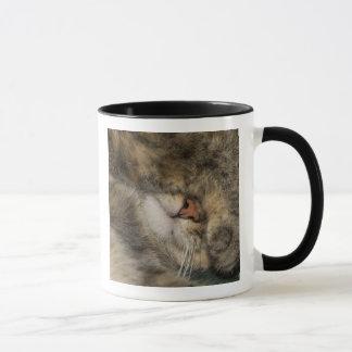 Mug Yeux de bâche de chat de Chambre tout en dormant