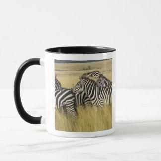 Mug Zèbre de plaines (quagga d'Equus) dans l'herbe,