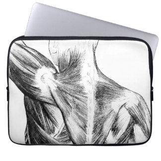 Muscles du dos vintages de l'anatomie | (circa trousses pour ordinateur portable