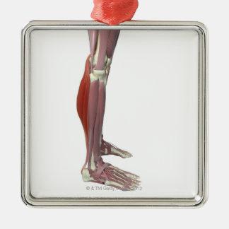 Muscles jumeaux de la jambe et muscle de Soleus Ornement Carré Argenté
