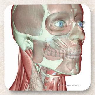 Musculoskeleton de la tête et du cou 5 dessous-de-verre