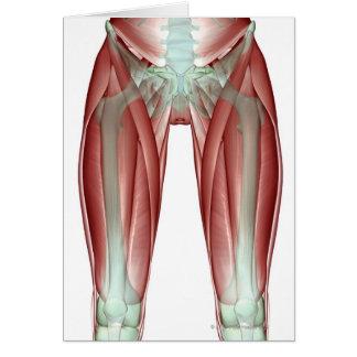 Musculoskeleton du membre inférieur carte de vœux