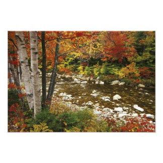 N.A., Etats-Unis, New Hampshire, montagnes blanche Photographies D'art