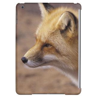 Na, Canada. Fox rouge