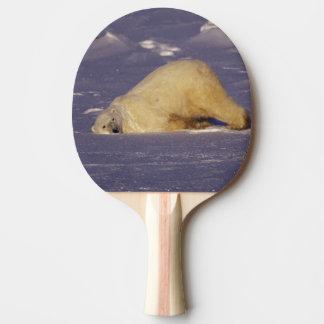 Na, Canada, Manitoba, Churchill, ours blanc Raquette De Ping Pong
