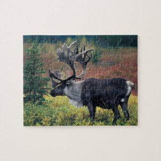 Na, Etats-Unis, Alaska, Denali NP, caribou 3 de Ta Puzzle