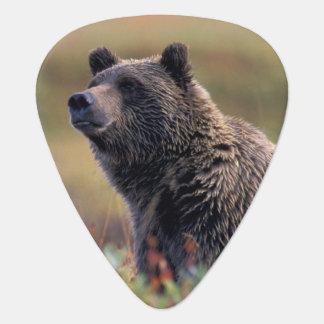 Na, Etats-Unis, Alaska, Denali NP, ours gris Médiators