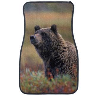 Na, Etats-Unis, Alaska, Denali NP, ours gris Tapis De Sol