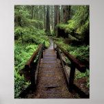 Na, Etats-Unis, la Californie, séquoias de Jedidia Affiches
