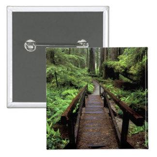 Na, Etats-Unis, la Californie, séquoias de Jedidia Badge