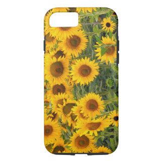 Na, Etats-Unis, le Colorado, tournesols Coque iPhone 8/7