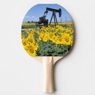 Na, Etats-Unis, le Colorado, tournesols, huile Raquette Tennis De Table