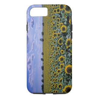 Na, Etats-Unis, le Kansas, culture de tournesol Coque iPhone 8/7
