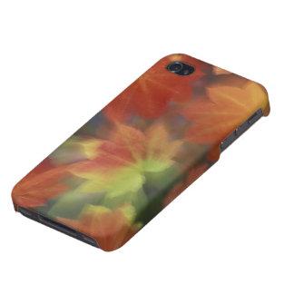 Na, Etats-Unis, Washington, Issaquah, érable de Étuis iPhone 4