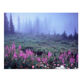 Na, Etats-Unis, Washington, pré alpin brumeux, Mt. Carte Postale