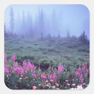 Na, Etats-Unis, Washington, pré alpin brumeux, Mt. Sticker Carré