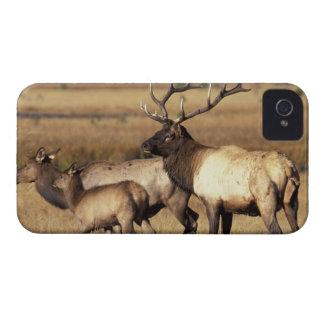 Na, parc national des Etats-Unis, Wyoming, Coques iPhone 4
