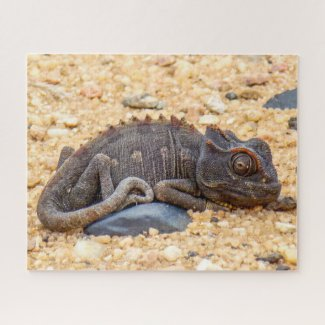 Namibia Safari Jigsaw Puzzle - wild chameleon