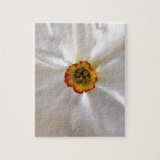 narcisse de blanc de perle puzzle