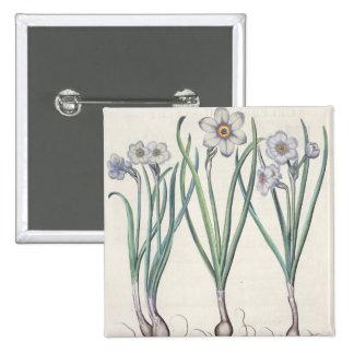 Narcisses : purpureus de medio du maximus 1.Narcis Pin's