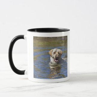 Natation de chien tasses