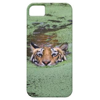 Natation de tigre de Bengale Coque iPhone 5 Case-Mate