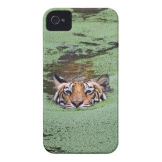 Natation de tigre de Bengale Coques iPhone 4 Case-Mate