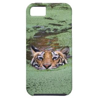 Natation de tigre de Bengale iPhone 5 Case