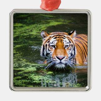 Natation de tigre ornement carré argenté