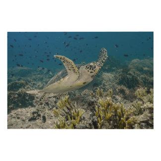 Natation de tortue de mer de Hawksbill Impression Sur Bois
