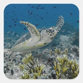 Natation de tortue de mer de Hawksbill Sticker Carré