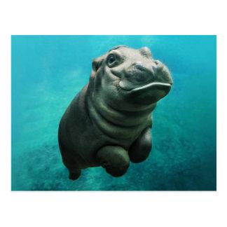 Natation d'hippopotame de bébé cartes postales