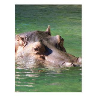 Natation d'hippopotame sur la surface carte postale
