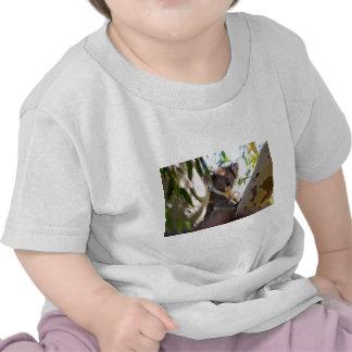 Nature de destin d'Aussi d'ours de koala à l'intér T-shirts