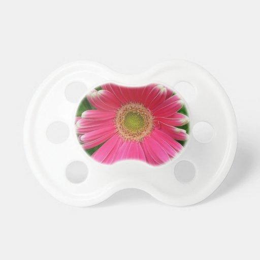 Nature rose de fleur de marguerites de Gerber Sucette Pour Bébé