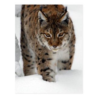 Neige Lynx Carte Postale