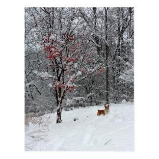 Neige tôt : Carte postale de corgi