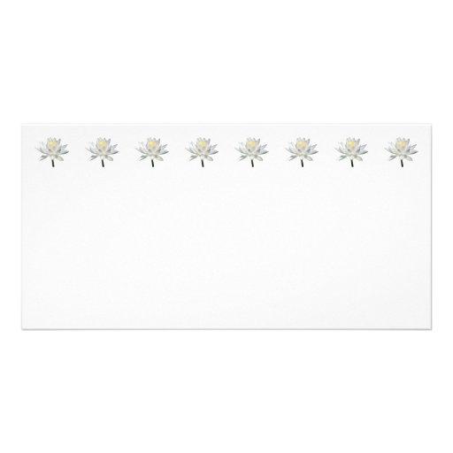 Nénuphar blanc en soleil modèle pour photocarte