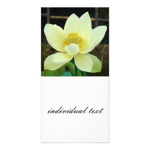 nénuphar cartes de vœux avec photo