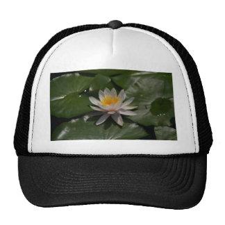Nénuphar de Lotus blanc Casquette De Camionneur