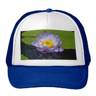 Nénuphar de Lotus et casquette pourpres de