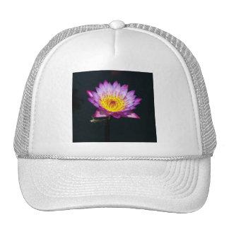 Nénuphar de Lotus et casquette pourpres de nymphe