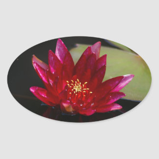 Nénuphar magenta de Lotus Sticker Ovale